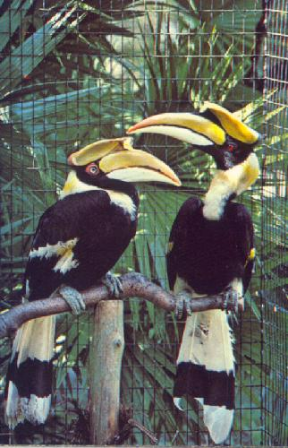 BIRDS PROTECTED ON DISCOVERY ISLAND